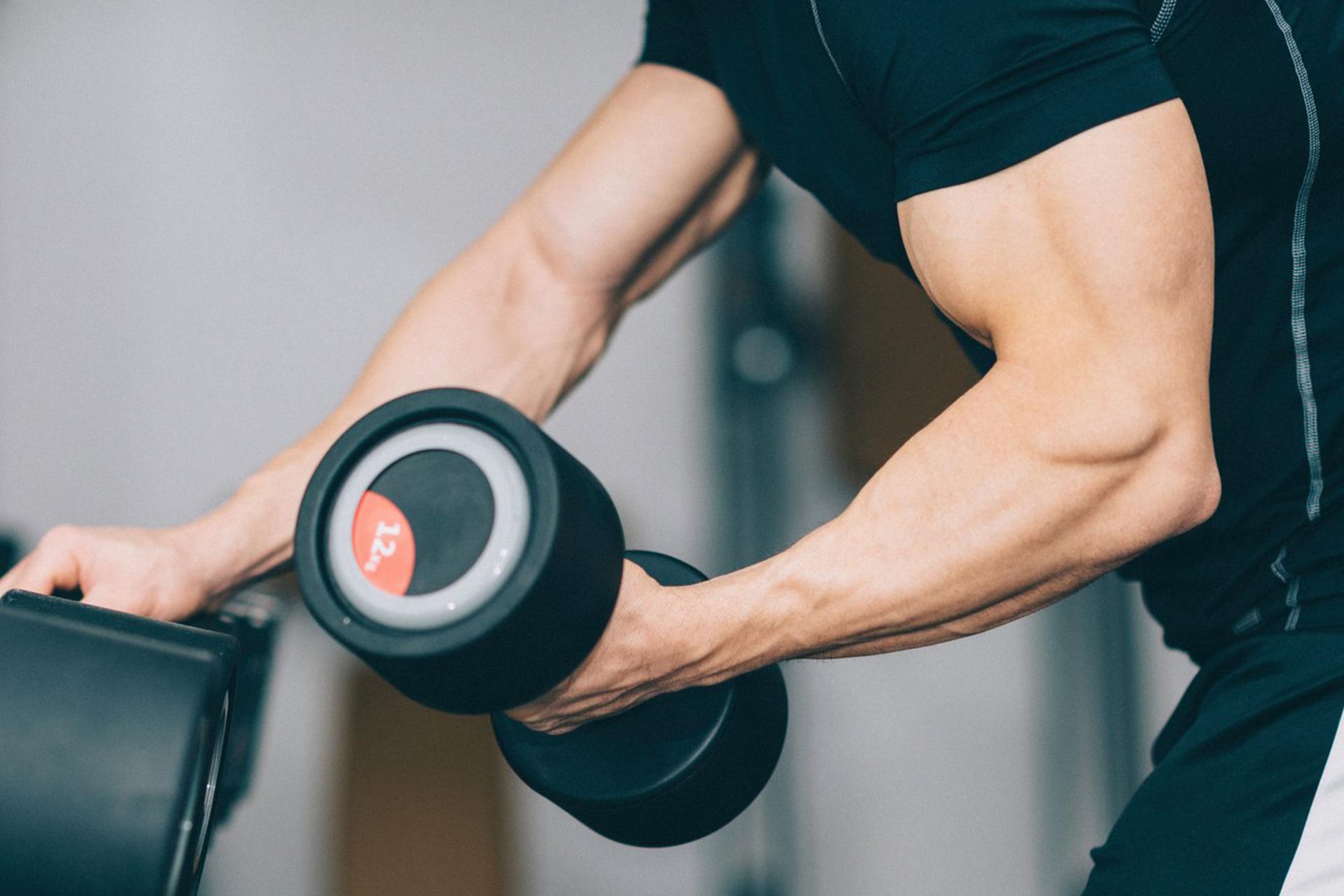 esercizi massa muscolare